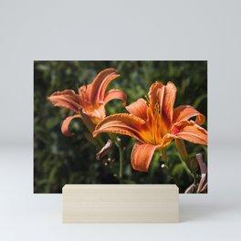 Orange Yellow Fire Lily Mini Art Print