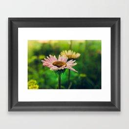 Daisy VI Framed Art Print