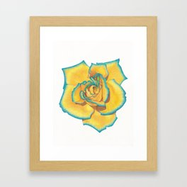 Yellow and Turquoise Rose Framed Art Print