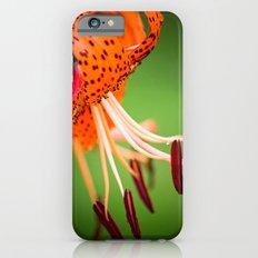 Delight Slim Case iPhone 6s
