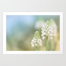 Dreamy Grape Hyacinth.... Art Print