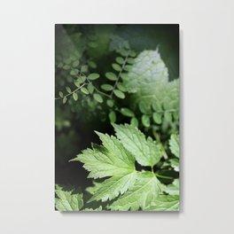 Ferns Alight Metal Print