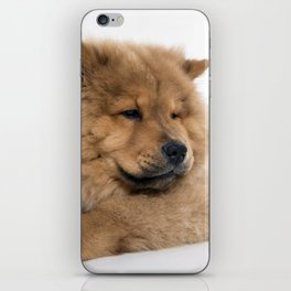 Chow Chow Chilling iPhone Skin