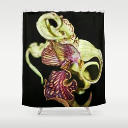 Dendrobium Spectible (The Alien Orchid) Shower Curtain