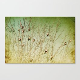 The Berry Snatchers Canvas Print