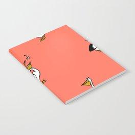 Birds Pelican Notebook