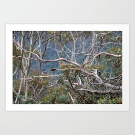 Australiana No. 2 Art Print
