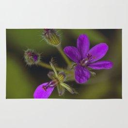 Wid Purple Rug