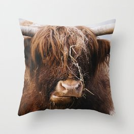 Highland cow feeding on straw on a frosty winters morning. Norfolk, UK. Throw Pillow