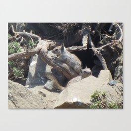 San Simeon Squirrel Canvas Print