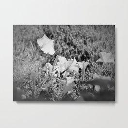 Morning Petunias B&W Metal Print