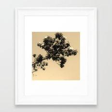 Magnolias In Flight Framed Art Print