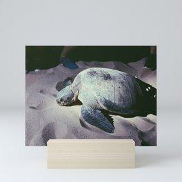 TURTLE Mini Art Print