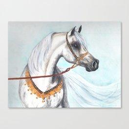 Egyptian Arabian stallion Canvas Print