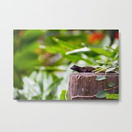 Brown Anole on Post Metal Print