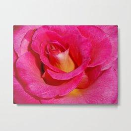 Luscious Rose Metal Print