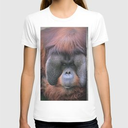 Orangutan Look T-shirt