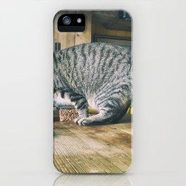Cat by Greg Pauline iPhone Case