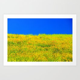 yellow poppy flower field with green leaf and clear blue sky Art Print