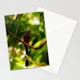 Turquoise-browed Motmot, beautiful bird of Mexico Stationery Cards