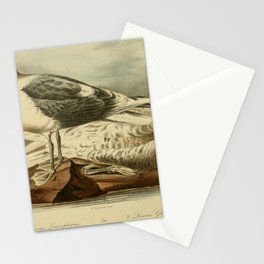 Iceland Gull Glaucous Gull larus leucopterus larus glaucus10 Stationery Cards
