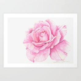 Deep Pink Rose with a touch of yellow Art Print