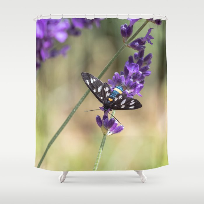 Amata Phagea on lavender Shower Curtain