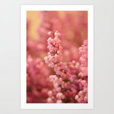 Pink Heather Art Print