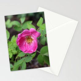 Bright Pink Wild Rose 2 Stationery Cards