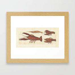 Lobster, Crawfish and Shrimp Vintage Illustration, 1560 Framed Art Print
