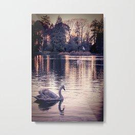 Swan Lake 2 Metal Print