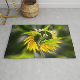 The sunflower from behind Rug