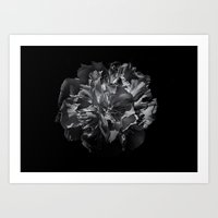 Backyard Flowers In Black And White 25 Art Print