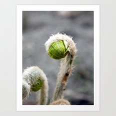 Fiddlehead Art Print