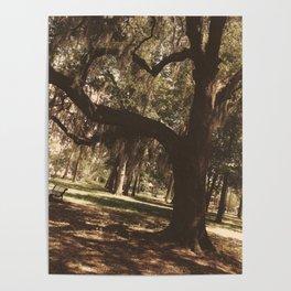 Tree heart in Historic Avadale Jacksonvll Florida Poster