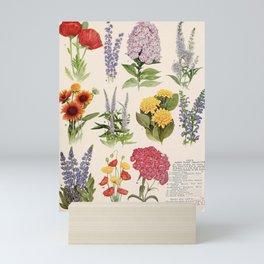 garden 088 Poppy  delphinium  phlox  gaillardia  helianthus  saliva  lupinus  poppy  sweet william9 Mini Art Print