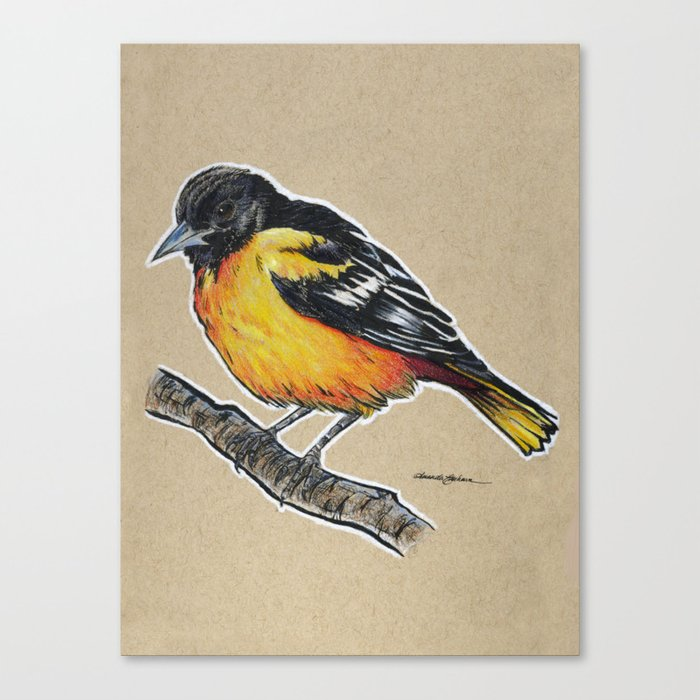 state bird series maryland baltimore oriole canvas print by