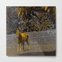 Cute miniature horse foal. Metal Print