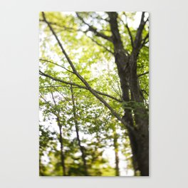 More trees! Canvas Print