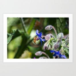 Bee and Borage Flower Flirtations Art Print