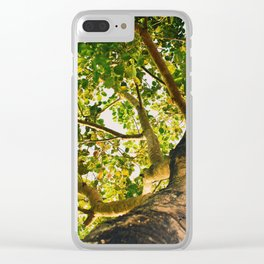 summer tropical tree foliage bottom view Clear iPhone Case