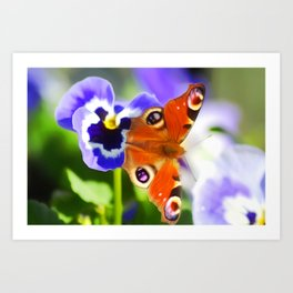 Butterfly Art For Animal Lover Art Print