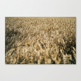 Wheat Field In The Wind Canvas Print
