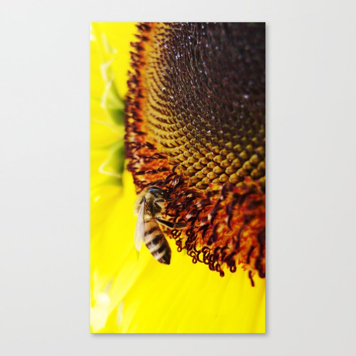Busybee Canvas Print