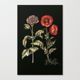 Carnation & Poppy on Charcoal Canvas Print