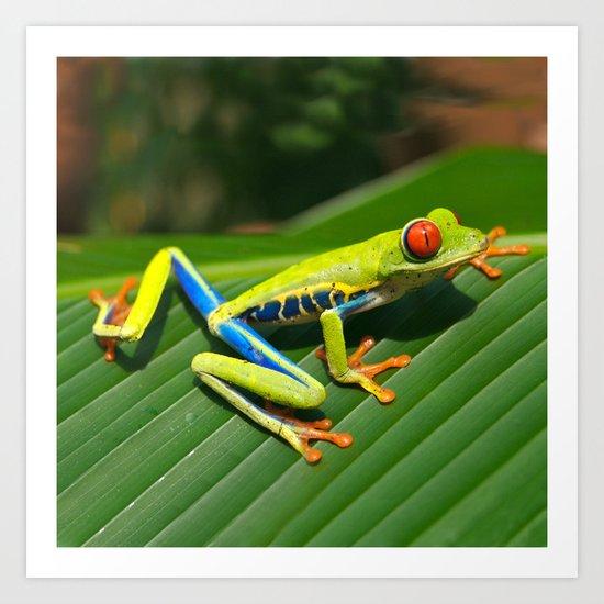 Green Tree Frog Red-Eyed Art Print