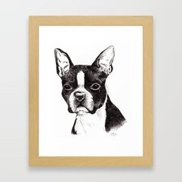 Boston Terrier Portrait Framed Art Print