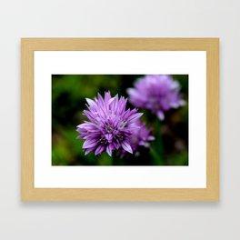 Chive Blossoms Framed Art Print