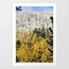 Colours Of The Forest Art Print