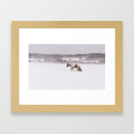 Lonely horse in the snow Framed Art Print
